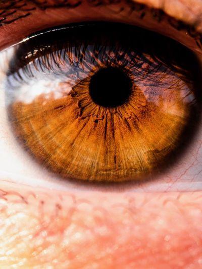 Sensory Perception Eye Human Body Part Eyesight Body Part Human Eye One Person Eyeball Iris - Eye Extreme Close-up Close-up Eyelash Beautiful Woman Looking At Camera Macro Brown Eyes Unrecognizable Person Adult Portrait Reflection
