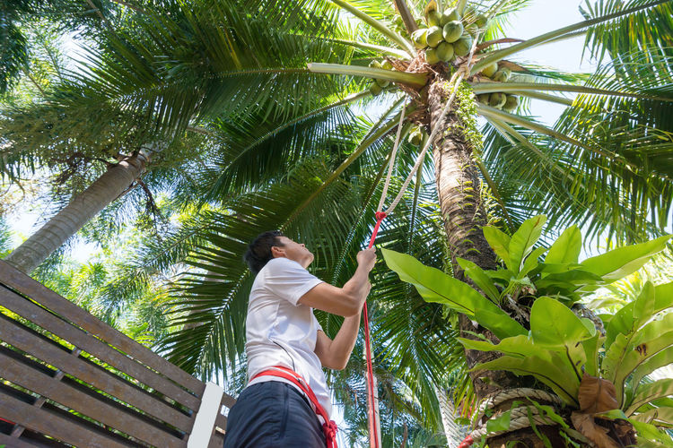 Low Angle View Of Man Climbing Coconut Tree