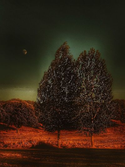 Romantic Inlove Love Dark Darkness And Light Darkness Dehesa Tree Beauty In Nature Nature Tranquility Tranquil Scene Scenics Landscape Night Outdoors Moon Moonlight Rural Nature_collection Countryside Landscape_Collection Rural Scene Populus Nigra Populus