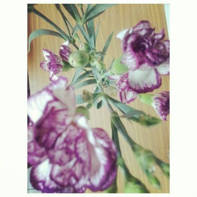 Just bought a bouquet of carnation ^^