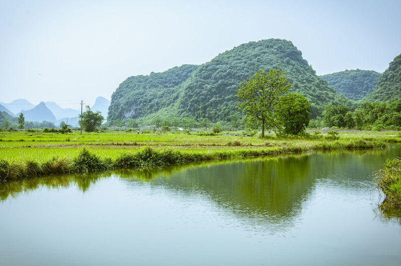 Scenic view of lake by field against clear sky