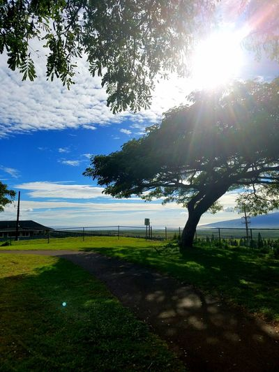 Ohana ❤ Maui EyeEmNewHere Eyemphotography Tree Nature Tranquility Outdoors Water Tranquil Scene Sky Sunlight Landscape Beauty In Nature