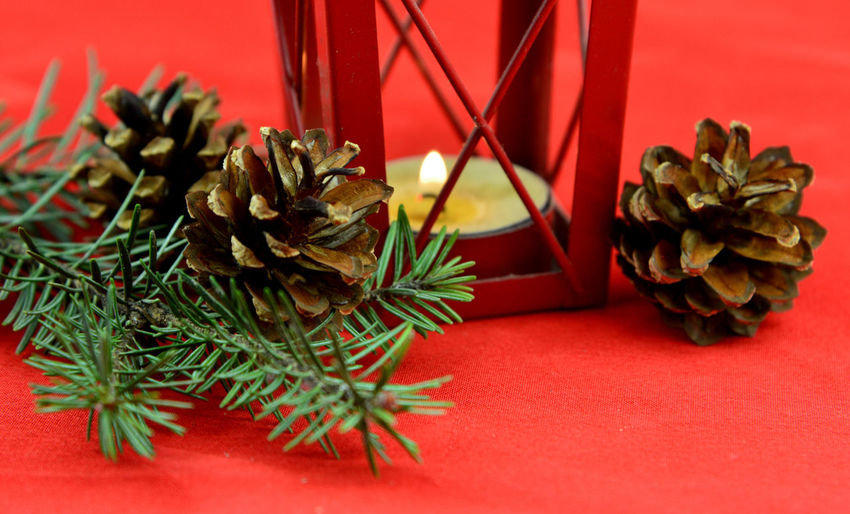 Close-up of pine cones on table
