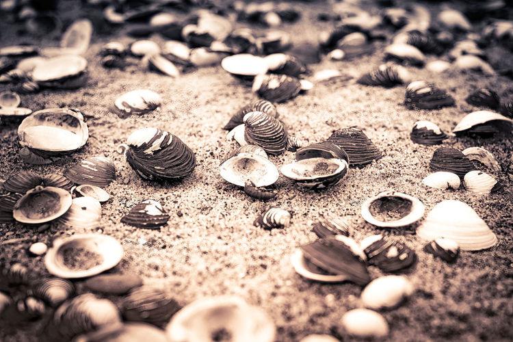 High angle view of shells on ground