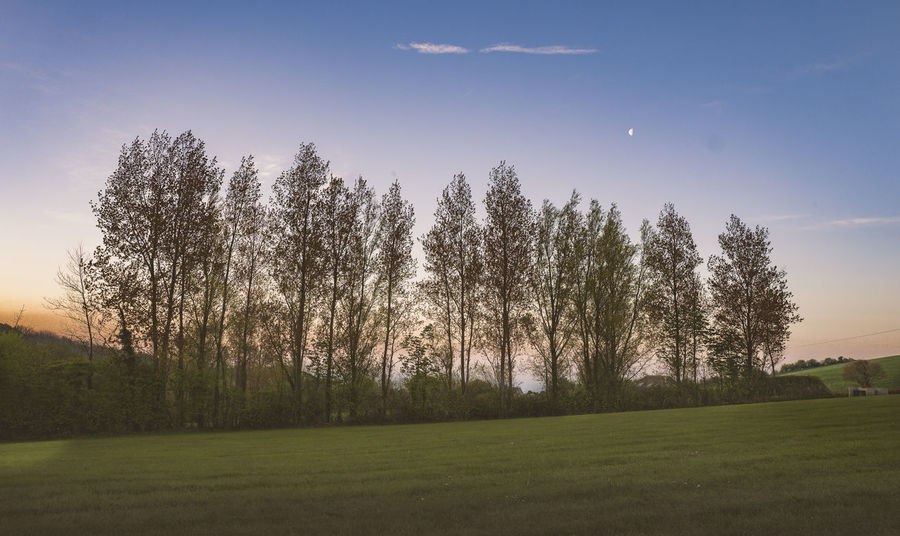 Trees at twilight Beauty In Nature Field Grass Landscape Nature New Moon No People Outdoors Scenics Sky Tranquil Scene Tranquility Tree Twilight