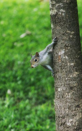 Animal Tree Animal Themes Animals In The Wild Trunk Tree Trunk Animal Wildlife