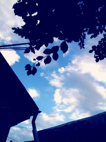 Blue Blue Color Blue Sky White Clouds Leafs Branches Vintage4 Wolfzuachis Eyeem Market