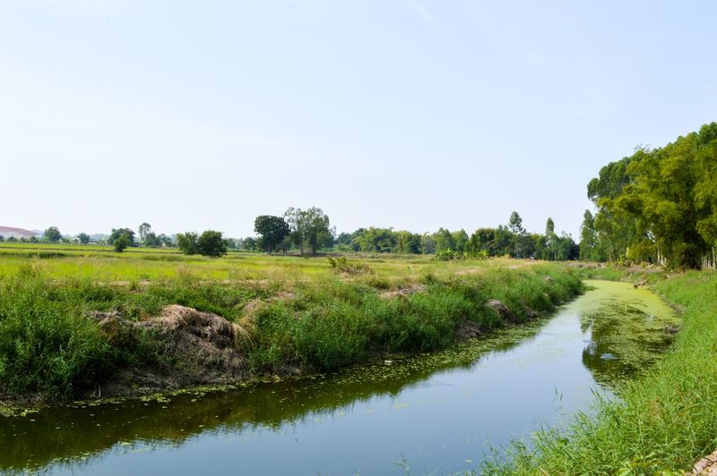 Freshness Grass Green Nakhon Nayok Natural Nature Plant Thailand Travel Tree Beauty In Nature Canal Clear Sky Day Environmnet Fresh Grass Green Color Landscape Marsh Nature No People Outdoors Plant Reflection River Scenics Sky Swamp Tranquil Scene Tranquility Tree Water Weed