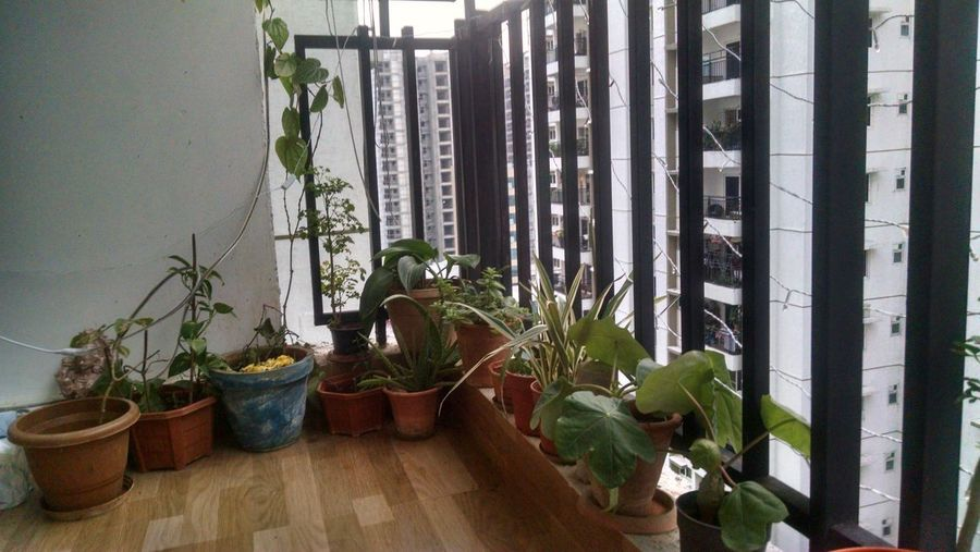 My Favourite Hobby Plants 🌱 Potted Plant Indoors  Home Interior Window Nature No People Day