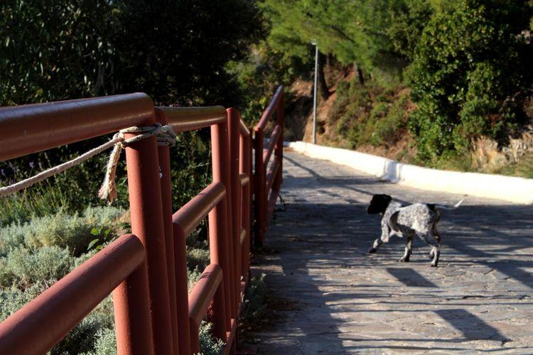 Path Pathway EyeEmNewHere Pets Tree Dog Fence Railing The Street Photographer - 2018 EyeEm Awards The Traveler - 2018 EyeEm Awards Summer Road Tripping