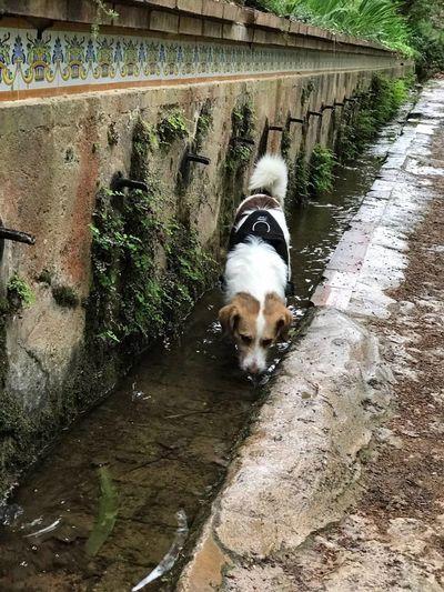 Probando olores. Dog One Animal Animal Themes Domestic Animals Nature