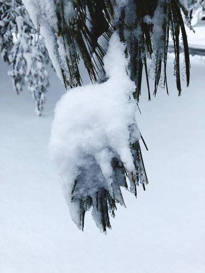 Tree Close Up Winter Snow Cold Temperature Weather Frozen White Color Nature Outdoors Tree No People Day Ice Beauty In Nature Landscape Scenics Snowdrift Snowing Close-up Warm Clothing