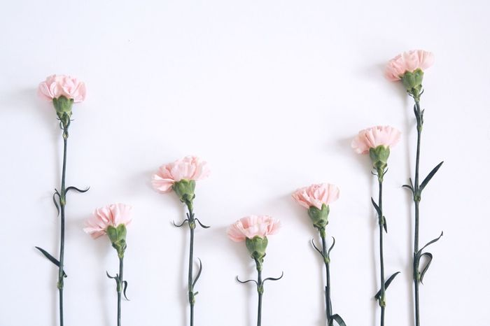 Flower Fragility Growth Beauty In Nature Petal Freshness Flower Head Blooming Pink Color White Background Close-up Flower Arrangement Flowers On Table Carnation Flowers Simplicity Close Up Flower Pink Carnation Minimalism Flowers In Bloom Pastel Power Deceptively Simple Lifestyles Stem Lighter & Brighter Freshness