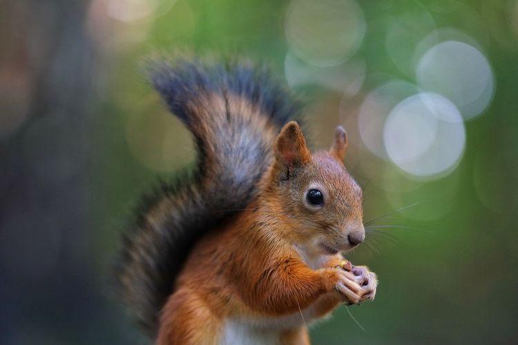 Squirrel Bokeh Bokehlicious белка EyeEm Nature Lover