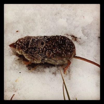 Frost ? Geocaching Vinter