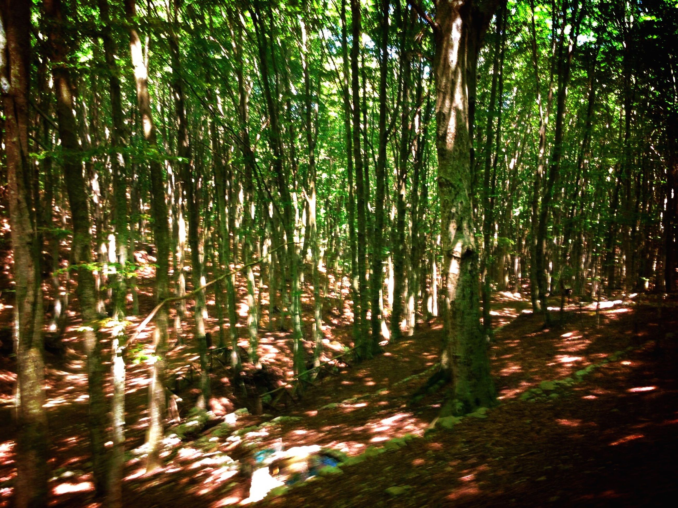 tree, nature, forest, outdoors, no people, green color, landscape, growth, beauty in nature, tranquility, lush - description, bamboo grove, day