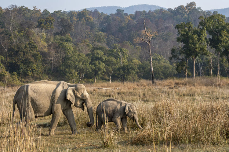 View of elephant walking on land