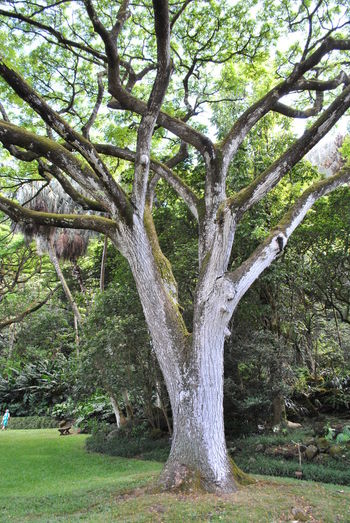 Bare Tree Beauty In Nature Branch Day Grass Green Color Growth Nature No People Outdoors Scenics Tranquility Tree Tree Trunk