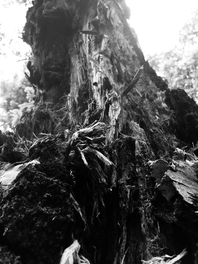 Shredded tree bark Tree Mountain Day Low Angle View Nature Rock