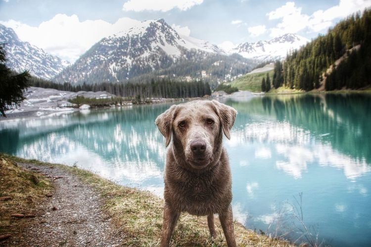 Portrait of dog standing by lake