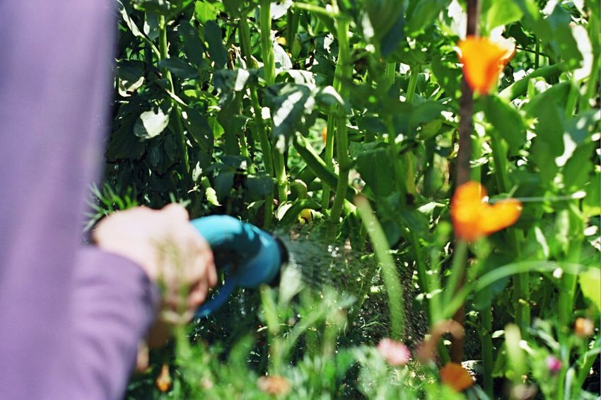 One Person Outdoors Real People Grass One Man Only Human Hand Koduckgirl My Garden Zenit122 Film Husband