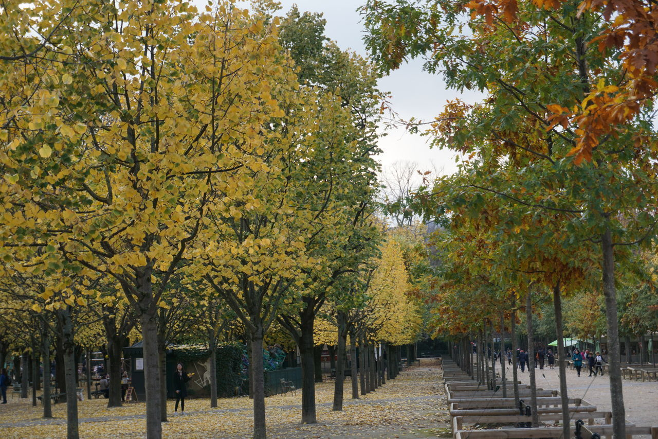 VIEW OF PARK DURING AUTUMN