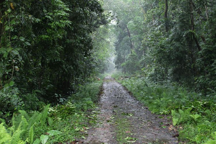 Welcome to the jungle. Jungle Wildlife Sanctuary Assam Gibbon Wildlife Sanctuary Rainy Day Hike