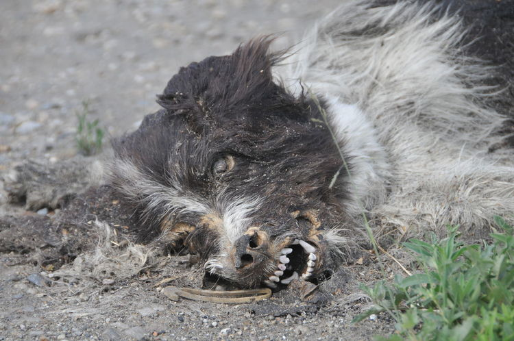 Dead Animals Dead Dog  Low Angle View Animal Themes Close-up Day No People One Animal