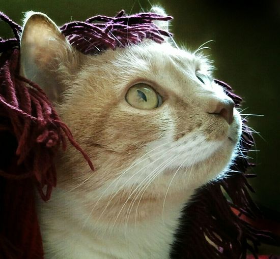 Catman! Curiousity My Cat Is Cooler Than Your Kids EyeEm Best Edits New Hair Style EyeEm Best Shots AntiM