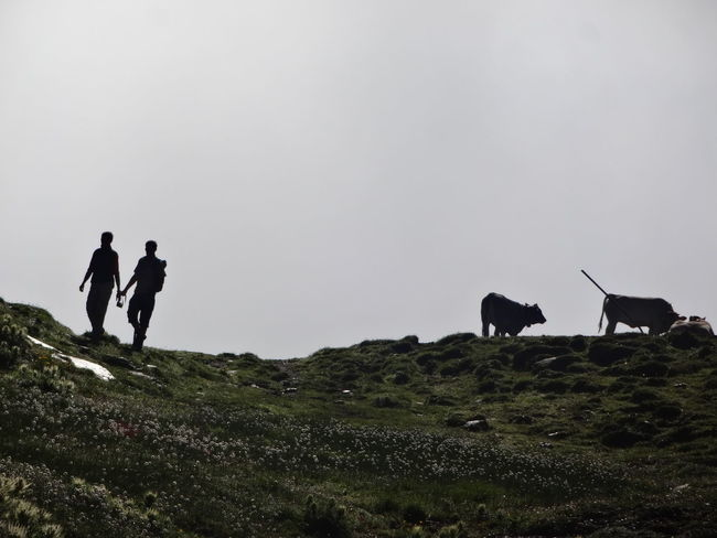 Blackandwhite Clear Sky Copy Space Cow Cows Domestic Animals Field Full Length Green Color Hill Leisure Activity Men Nature Non-urban Scene Outdoors Remote Scenics Silhouette Sky Standing Switzerland Tourism Tranquil Scene Tranquility Walking