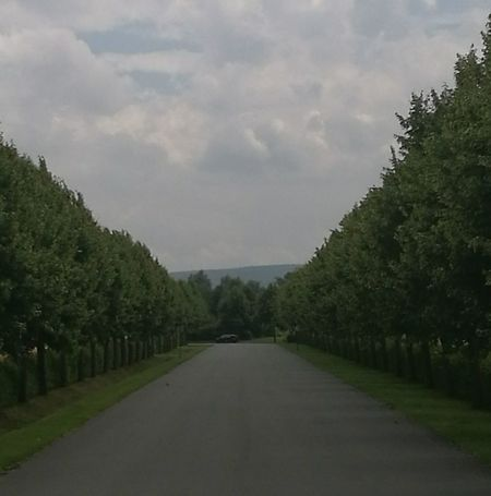 Beauty In Nature Cloud Cloud - Sky Cloudy Country Road Diminishing Perspective Empty Empty Road Green Color Growth Idyllic Landscape Long Nature No People Non-urban Scene Outdoors Road Scenics Sky The Way Forward Tranquil Scene Tranquility Tree Vanishing Point