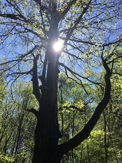Im Wald 🌳 Nature