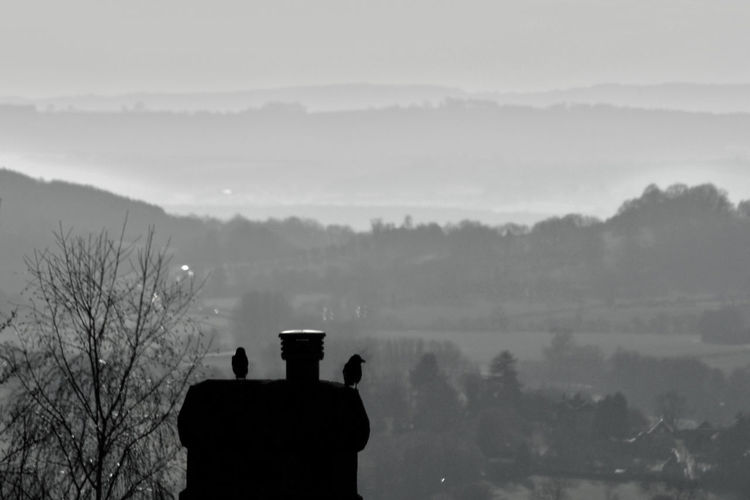 Silhouette Fog Nature Tree Beauty In Nature Outdoors Sky Day Chimney Chimney Tops Birds Landscape Countryside Malvern Malvern Hills Malvernhills Worcestershire Uk Black And White Friday