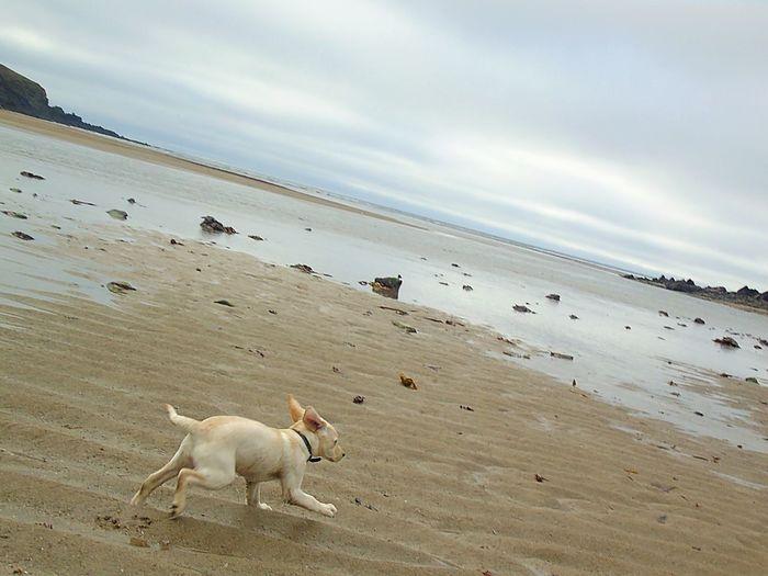 Dogs on beach against sky