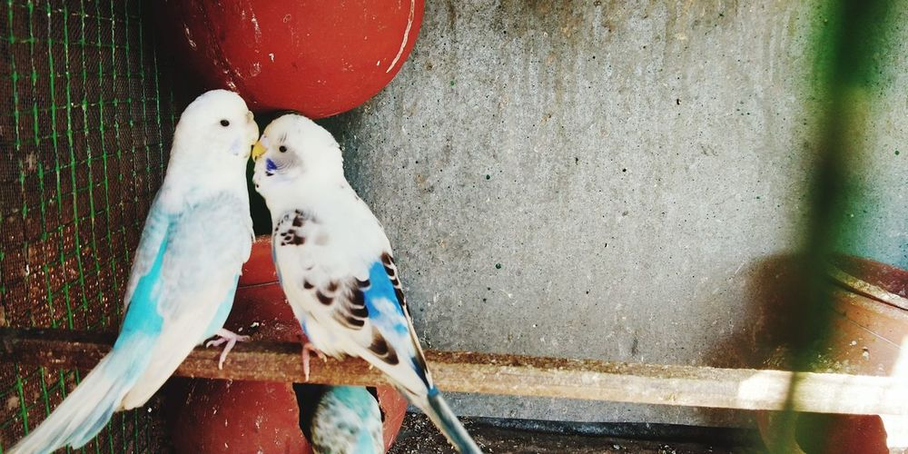birds love No People Animal Themes Bird Water Animal Wildlife Day Outdoors