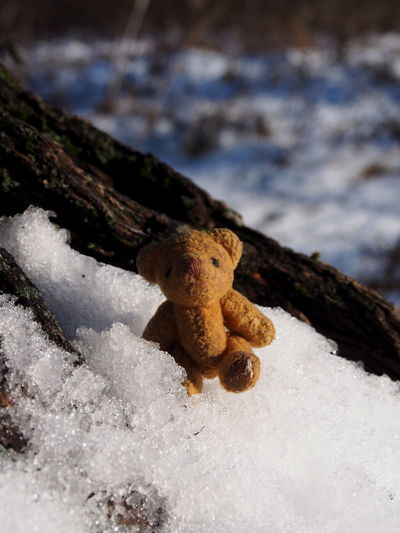 No People Nature Close-up Day Toy Snow Focus On Foreground Winter Cold Temperature Selective Focus Fungus Mushroom Land Outdoors Stuffed Toy Beauty In Nature Tree Plant Teddy Bear Toadstool