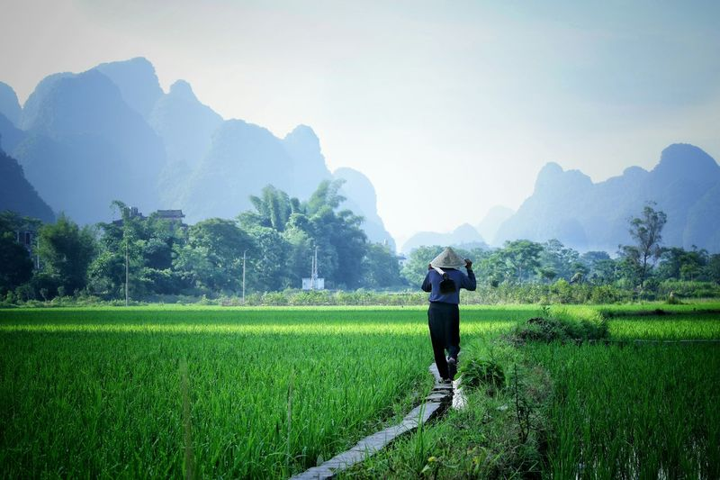 Farmer Walking On Concrete Path Amidst Grass Field