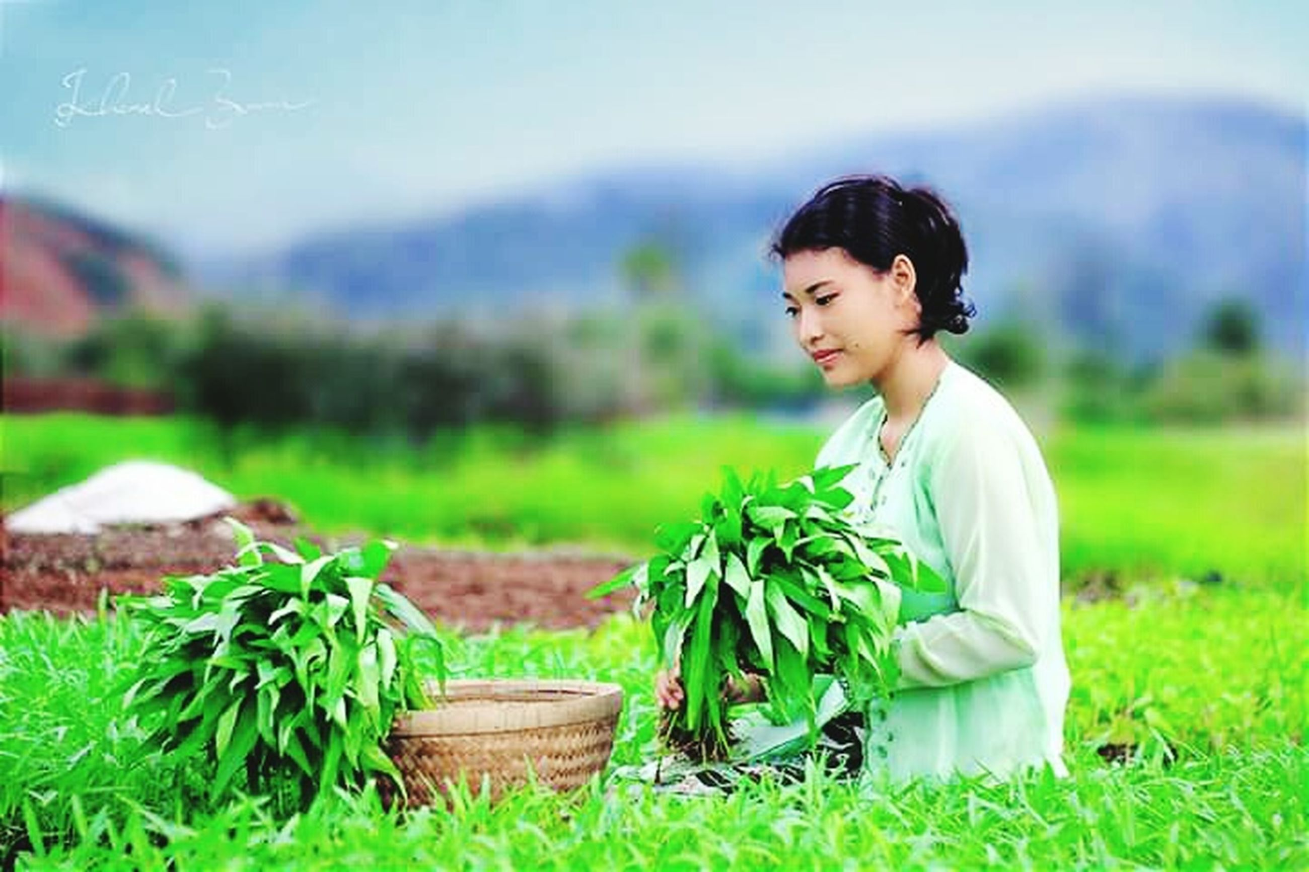 plant, one person, adult, green color, young adult, grass, vegetable, nature, basket, growth, beauty, agriculture, food and drink, lifestyles, women, field, container, food, gardening, beautiful woman, organic, outdoors