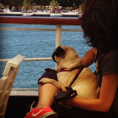 looking forward Sardegna Dogs