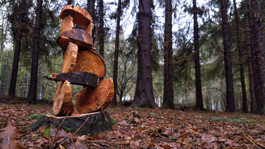 Tree trunk in forest during autumn