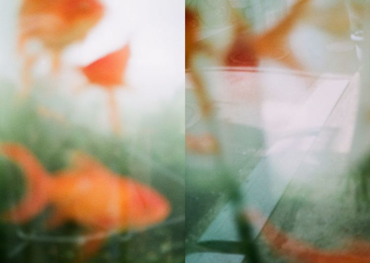 D I P T I C Art Is Everywhere Composition EyeEm Best Shots EyeEmNewHere Film Soft Soft Light Artistic Photo Day Delicate Diptic Diptico. Diptych Film Photography Filmisnotdead Filmphotography Grain Outdoors Soft Focus Softness