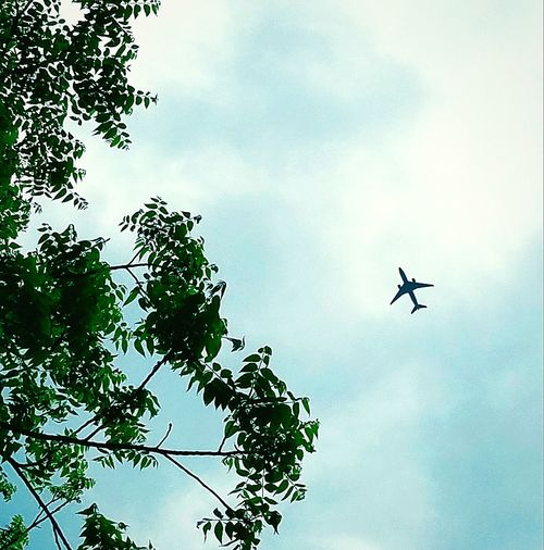 Flying high. Plane Airliner Sky Flying High Trees Looking Up Travel Hello World Far Out A Little Bit Of Heaven