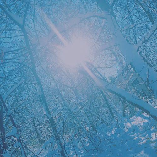 winter wonderland Bright Blinding Light