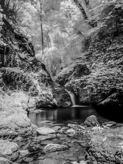 Waterfall at Plas Cadnant, Menai Bridge, Anglesey. Beauty In Nature Day Flowing Flowing Water Forest Growth Idyllic Infrared Infrared Photography Motion Nature No People Outdoors Remote River Rock Rock - Object Rock Formation Scenics Stream Tranquil Scene Tranquility Travel Destinations Tree Water