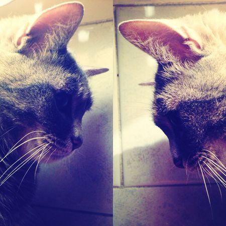 Gatto miao Goodmorning :)