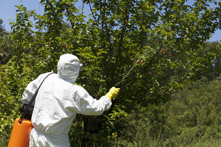Rear view of worker spraying pesticide on plants