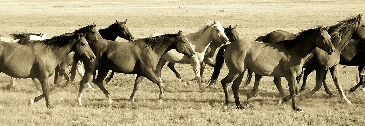 Animal Themes Black And White Collection  Black And White Photography EyeEm Best Shots Eyeem Horse Lovers Herd Horses Livestock Ranch Ranch Life Running Horses