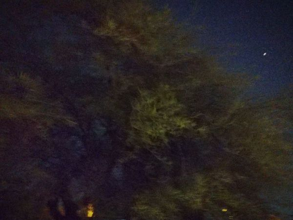 Night Tree No People Sky Outdoors Beauty In Nature Nature Mesquite In Motion Scenics
