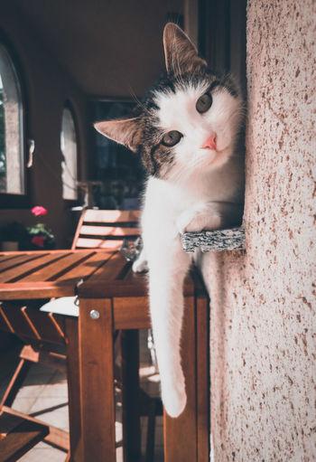 Portrait of cat sitting windows ill