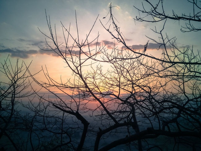 http://photofie.com/entries/7265. Please visit the above link and hit like. Support my entry to win the Best Shot Of November Morning Light Morning Sky November Treeart Tranquility Branches And Sky First Eyeem Photo
